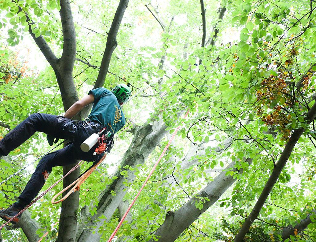 Baumpflege  Professionelle Baumpflege in Basel, Basel-Land und Aargau ...